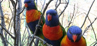 Lorikeet Adventure <br/> Denver Zoo