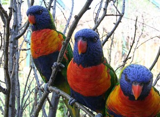 Lorikeet Adventure <br/> Denver Zoo