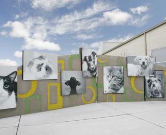 Murfin Animal Care Campus </br> Kansas Humane Society