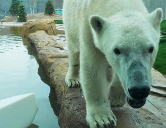 Arctic Passage <br/> Henry Vilas Zoo