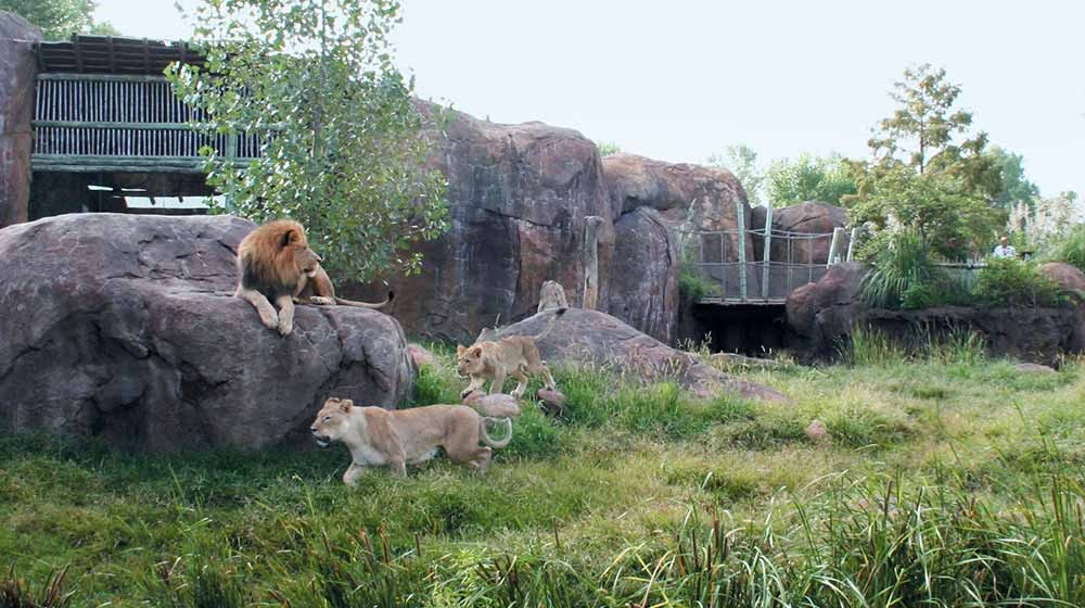 Zoo Architects Wdm Pride Of The Plains