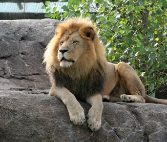 Pride of the Plains <br/> Sedgwick County Zoo
