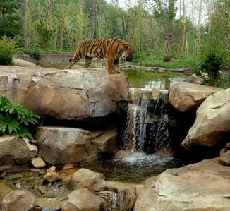 Slawson Tiger Trek <br/> Sedgwick County Zoo