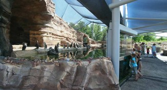 Cessna Penguin Cove <br/> Sedgwick County Zoo