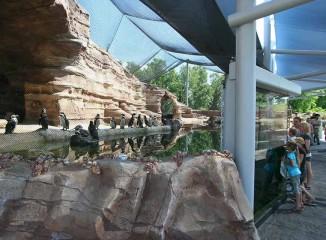 Cessna Penguin Cove <br/> Sedgwick County Zoo