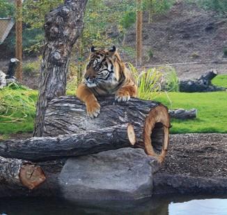 Isle of the Tiger </br> Phoenix Zoo