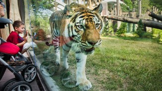 Rosebrough Tiger Passage <br/> Cleveland Metroparks Zoo