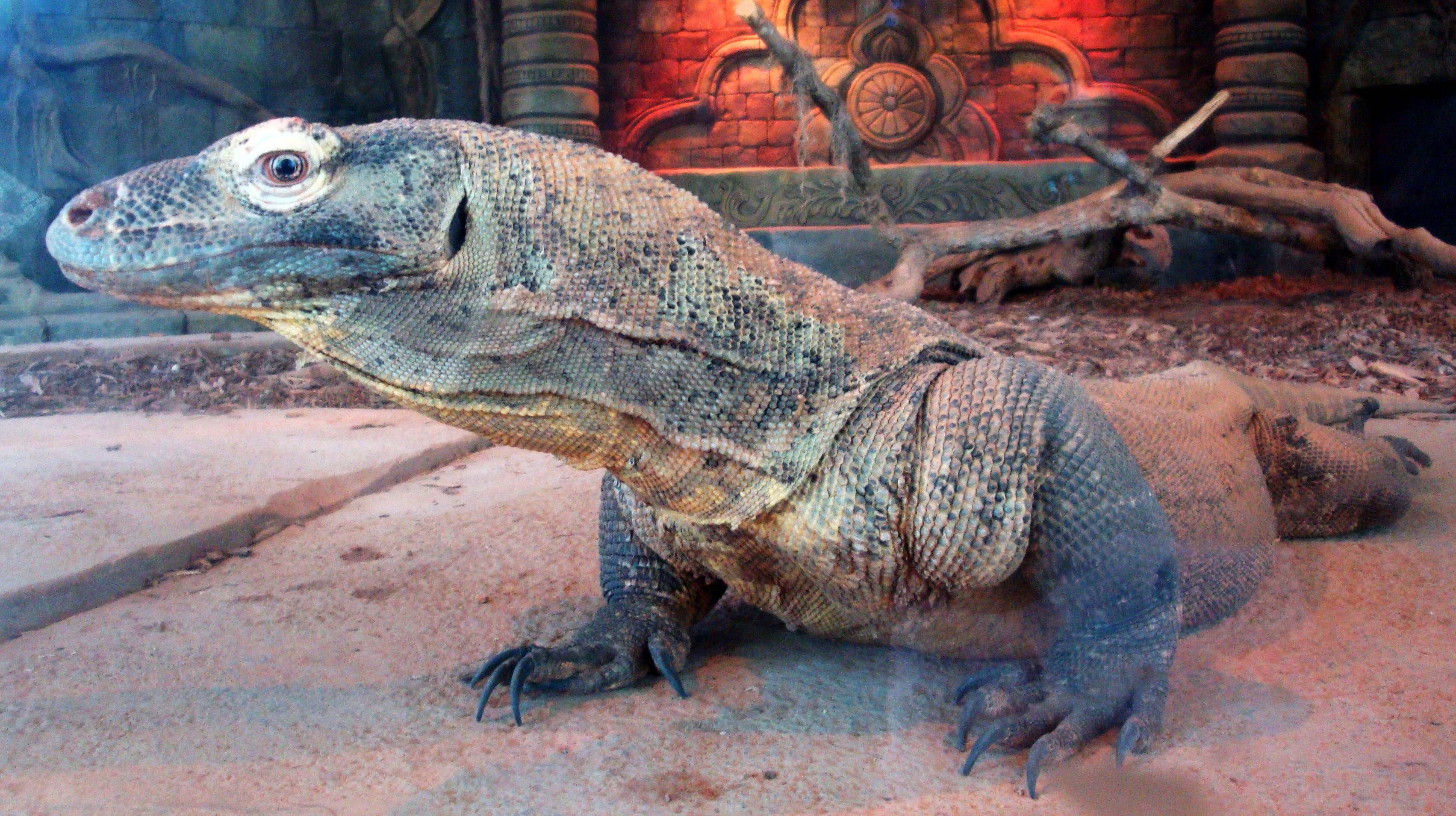 Asian komodo dragon